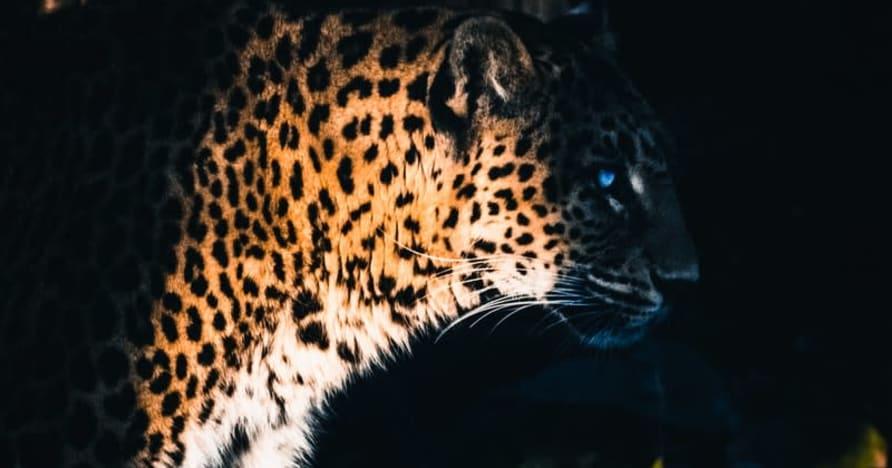 Yggdrasil kooperiert mit ReelPlay, um die Jaguar SuperWays aus Bad Dingo zu veröffentlichen